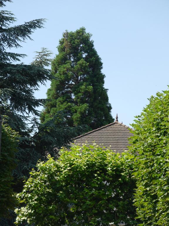 Séquoias géants de France  Séquoias géants à Pavillon  ~ Pavillon Du Bois