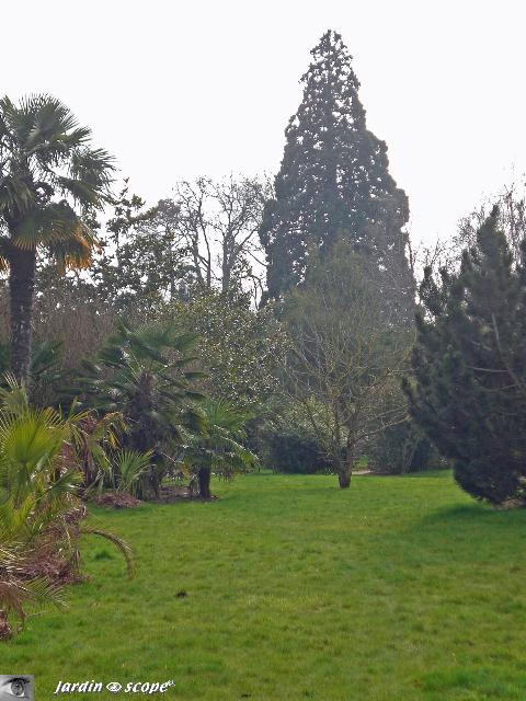 Sequoias Geants De France Sequoia Geant Au Jardin Botanique De
